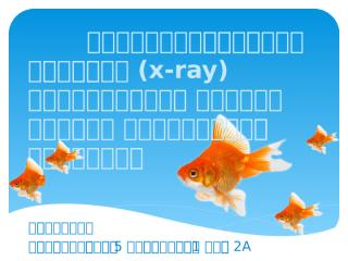 x-ray ปลา กลุ่ม 2.pptx